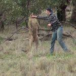 Hombre boxea a canguro para defender a un perro