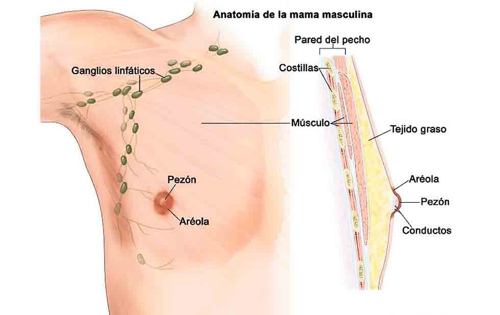 Los hombres también padecen cáncer de mama
