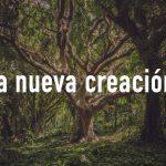 Palabras de Sabiduría 9 | La nueva creación.