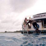 Michael Phelps y el desafío de nadar contra un tiburón blanco