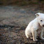 Abandono animal problema social