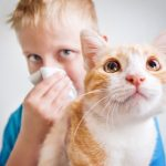 Veracidad News – ¿Alergia a los animales?