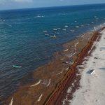 El sargazo afecta a los hoteleros de Riviera Maya