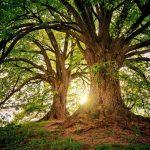 El Señor nos compara con árboles en la Escritura.
